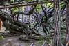 DSC_1603 (sayo-tsu) Tags: 藤 wisteria 牛島のフジ 春日部市 埼玉県 kasukabe saitama 特別天然記念物