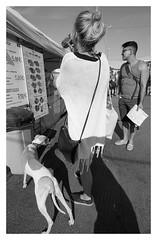Street scenes (danieltim.net) Tags: streetphotography blackandwhite film panfplus summer light lighting people dog urbanlife uwa selfdeveloped ddx europe candid