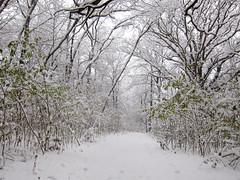 IMG_2827 (sjj62) Tags: s90 snow snowscape lith lakeinthehillsil winter winterscape