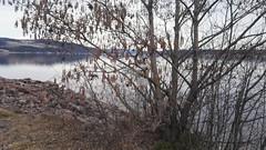 A release in a tree. (zimort) Tags: bok book bookcrpossing wildrelease gjøvik mjøsa lake innsjø