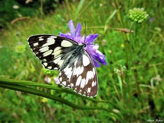 Butterfly 1210
