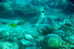 ... and they start to come out... (Landersz) Tags: philippines filippine coron palawan club paradise snorkeling turtle shark clownfish nemo dugong landersz canon 5dmk3 nimar gopro hero5