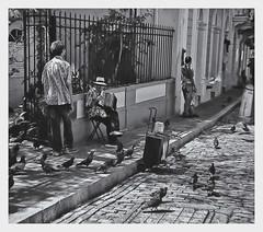 Kodak Instamatic 104 (!963) (Samy Collazo) Tags: kodakinstamatic1041963 rollei80s lightroom3 niksilverefexpro2 mosquito musico musician musicocallejero streetmusician acordeon accordion sanjuan oldsanjuan viejosanjuan puertorico adoquines cobblestones