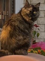 Senza titolo (Tilly Sfortunato) Tags: gatto