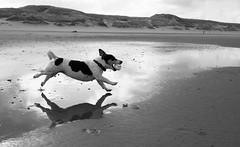 run (Georgie Pauwels) Tags: dog run beach fujifilm water fun moment