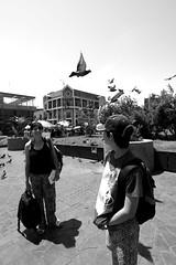 Glances (Andrés Luis Muñoz) Tags: nikon plaza square d3300 tokina1116mm paloma glances miradas granangular pigeon fly vuela street tokina1116mmf28 people gente smile live blackwhitephotos blackandwhite bw monochrome monocromo moment instante tokina personas doves