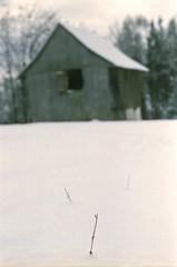 Stretch out and wait (swigadelica) Tags: swigadelica swig barn snow zürich 35mm fujipro400h film sigma50mmf14 f100 nikon