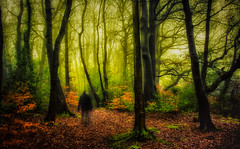 Putting The Real Into Surreal (Rob Pitt) Tags: walking fog cold winter morning rivacre valley blur misty cheshire wirral trees serene outdoor tree plant landscape forest lightroom