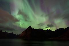 Aurores sur le Reinefjord (Tonton Dave) Tags: nature norway landscape paysage lofoten norvège aurores boréales