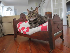 Nemo's new bed (graceewhite) Tags: nemo kitties