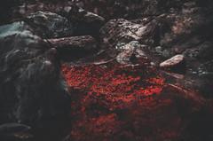 DSC_5446 (DeepLovePhotography) Tags: select deeplovephotography seanhelmn