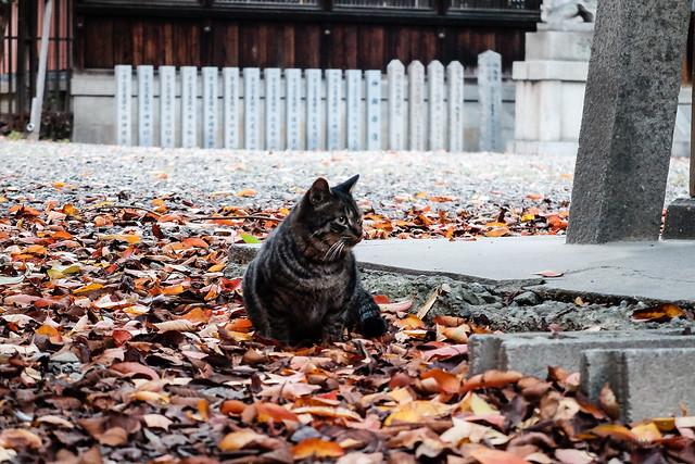 Today's Cat@2014-11-04