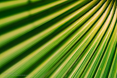 Light (Daniel Kulinski) Tags: light shadow sea sun tree green lines silhouette island photography europe mediterranean image daniel creative picture samsung poland palm greece crete warsaw shape 1977 photograhy nx kriti kulinski nx20 samsungnx samsungimaging limenaschersonisou danielkulinski samsungnx20