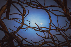 Entre galhos secos (Junior AmoJr) Tags: moon tree canon photography lua fotografia istock rvore visualart gettyimages drytree urbanarts lightroom5 wwwjunioramojrfotografocom pohotsopcc2014