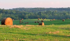 Late on an Evening in June (David Hoffman '41) Tags: trees light shadow sun field grass june rural forest fence landscape evening virginia woods scenery country hill farming rustic peaceful downhill fresh pasture vista late hay agriculture rise pastoral bale dip slant slope bucolic mown cyclical charlottecounty drakesbranch
