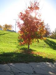 Sun behind tree (laedri52) Tags: park sun tree nebraska omaha hazan güneş ağaç sonbahar güz