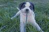 MegaByte (JellyBean Photos) Tags: dog baby grass puppy babygirl eatinggrass shelterdog dogeatinggrass shelterpuppy shelterdoggie