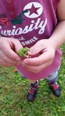 (Tylertello) Tags: japan child frog aomori inaka