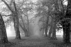 Platanenallee, Tübingen (stefanheymann) Tags: bw mist fog nebel sw d800 tübingen 1635 platanenallee