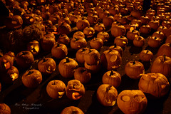 Folsom Pumpkins (bcr160) Tags: california ca night pumpkin nikon folsom sigma noflash 20mm et thousand d7100 kl0 bcr160