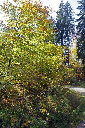 2014-10-12 Tegernsee 013 Prinzenweg, Alpbachtal