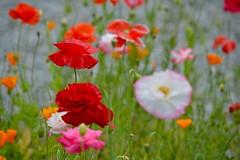 "flowers - ""Silent Symphony"""