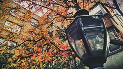 spare oom. (Carrots-Gilly) Tags: autumn light orange colors leaves witch lion lamppost narnia lantern wardrobe