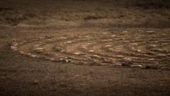 Steinkreise (bomme) Tags: urlaub menorca calapregonda
