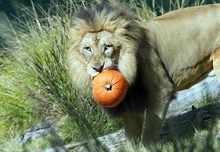John & his pumpkin
