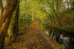 The Golden Canal Path (trevorhicks) Tags: autumn trees leaves forest canon woodland canal path devon tamron tavistock 700d