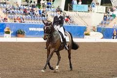 141025_2014_AUS_D_Champs_GPFS_5456.jpg (FranzVenhaus) Tags: horses performance sydney australia competition event nsw athletes aus equestrian riders dressage siec