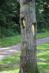 Uitgeholde . . . (willem_huwae) Tags: park canon bomen groen pad gras centrum limburg nuth 50d activiteiten img0309 willemhuwae