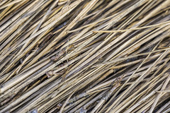 Angled Pine Needles (Mabry Campbell) Tags: usa brown color macro photography photo pattern texas photographer unitedstates image