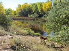 Marsh (Patricia Henschen) Tags: arkansasriver canoncitycolorado riverwalk usroute50