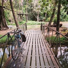 #Cycling #Cycle #Bicycle #Bike #VintageBike #NeoVintageBike #RodeBike #ClassicBike #ModernVintageBike #TouringBike #LightTouringBike #CustomBike #DG806Squalo #DG806 #DoppelgangerThailand #DoppelgangerBike #MobilePhotography #Bikie #Biketography #CyclingPh (RakkyStock) Tags: square squareformat unknown iphoneography instagramapp uploaded:by=instagram foursquare:venue=4da29307b3e7236ac6512179