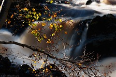 Falls of Feugh autumn 3 (D-j-L) Tags: longexposure autumn sun leaves river scotland waterfall aberdeenshire pentax sunny falls k5 banchory ndfilter smoothwater pentaxart