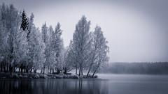 Iisalmi (Tuomo Lindfors) Tags: autumn lake fog suomi finland syksy järvi sumu iisalmi porovesi theacademytreealley