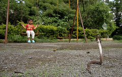 A Cobra in a Playground (cowyeow) Tags: boy playground playing swing swings swingset indiancobra najanaja naja cobra venom venomous dangerous pune india indian snake snakes reptile nature wildlife urbanwildlife herp herps herping herpetology maharashtra baby young juvenile park