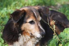 cute (@Katerina Log) Tags: park dog pet macro cute hellas athens greece tamron     sonyslta58 90mmf28macrossm katerinalog