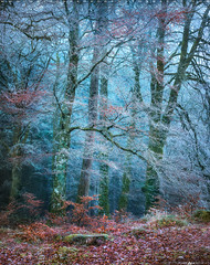 Into the Mystic #2 (Matt Anderson Photography) Tags: 2017 landscape mattandersonphotography scotland uk unitedkingdom hoarfrost magical color nopeople river garry loch oich invergarry december winter lush nature frost frosted fragility ethereal woodland tree outdoors paranormal mystery fantasy tranquilscene fog sunrisedawn coldtemperature scenics traveldestinations autumn idyllic meadow ephemeral emergence majestic ruralscene beautyinnature beechtree moss root perthshire theend madison wisconsin usa