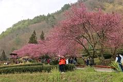 IMG_2944 (JBBTaipei) Tags: taiwan wulingfarm
