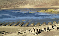 Alpacas overlooks the lake (maios) Tags: puno olympuse400 animal view blue