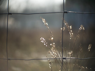 The good things are behind the fence - HFF!