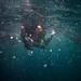 Snorkeling at Maya Bay