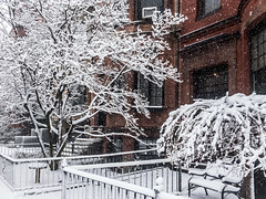 Back Bay Falling Snow ((Jessica)) Tags: boston massachusetts unitedstates us backbay snow snowstorm winterstormstella iphone iphone6s lightroommobile fallingsnow winter cold