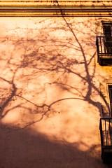 Carrer La Rambla, Barcelona  [Detail] (that petrol emotion) Tags: barcelona spain apartment trees setting sun sunshine flag catalonia catalonian independence autonomous iberian balcony shadows lasramblas