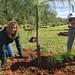 Highland_Renaissance_Tree_Planting_Event_2017 (42)
