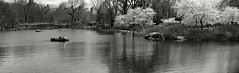 Lake Panorama _ bw (Joe Josephs: 3,122,834 views - thank you) Tags: nyc newyorkcity street streetphotogrpahy joejosephs photojournalism urbantravel urbanexlporation â©joejosephs2017 ©joejosephs2017 panoramas centralpark centralparknewyork spring springtime springflowers springcolor travelphotography travel manhattan urbanparks urbanlandscapes cityparks parks publicparks boats water lake