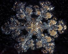 11feb17e (peterobrien186) Tags: pleochroic polarized crossedpolarized snow crystal snowflake ice nature winter macro golden
