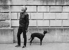 The Stand Off. (57Andrew) Tags: fujinonxf35mmf2 fujixseries standoff quarrel dog bwphotography monochrome fujifilmxt2